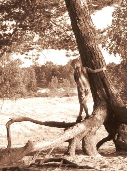 Anna Nieminen_Hyvää puuta