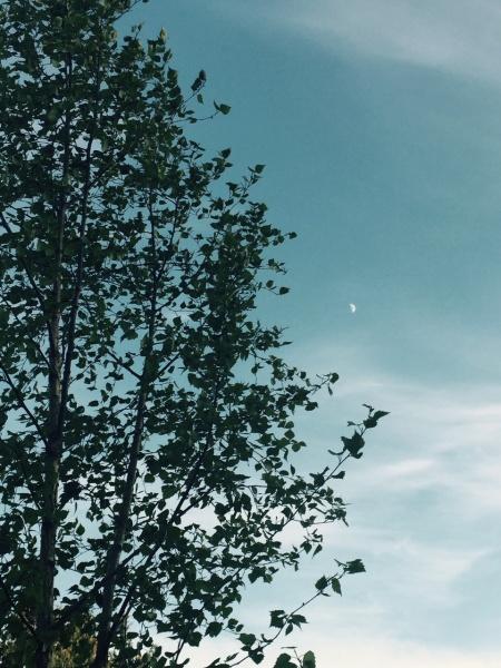 Anu Sakari_Koivu ja kuu